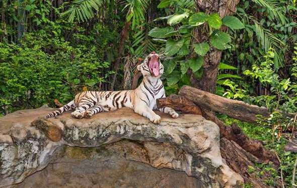 Зоопарк «Дусит»